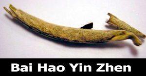 Bai Hao Yin Zhen tea